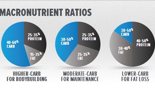 Which macronutrient ratios work best for losing belly fat?