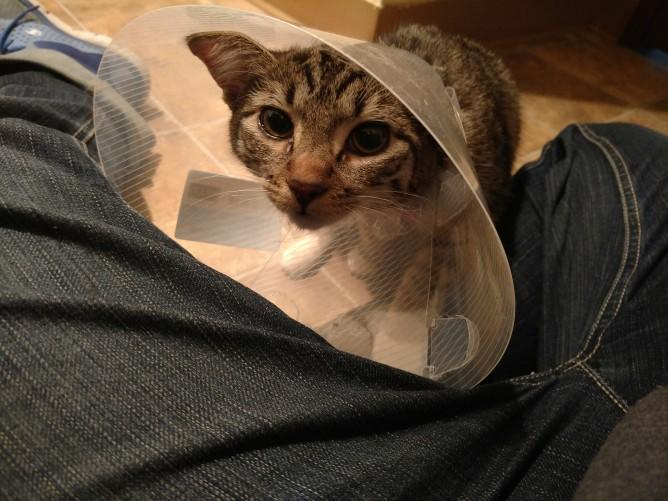 Cat won't eat after spay?