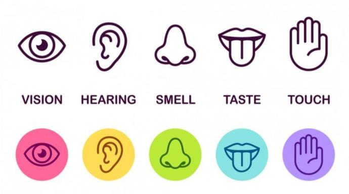 If You Had To Choose 1 Of Your 5 Senses To Live With, Which One Would You Choose?