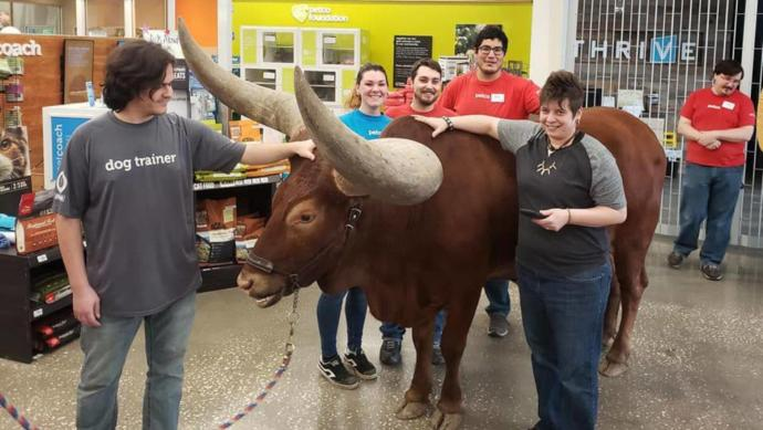 Would you take a bull to the pet store?