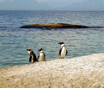 Would you want to visit tropical penguins in their native habitat?