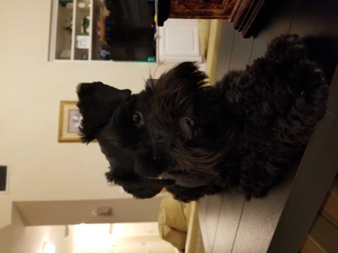 Do you consider dog muzzles to be cruel?