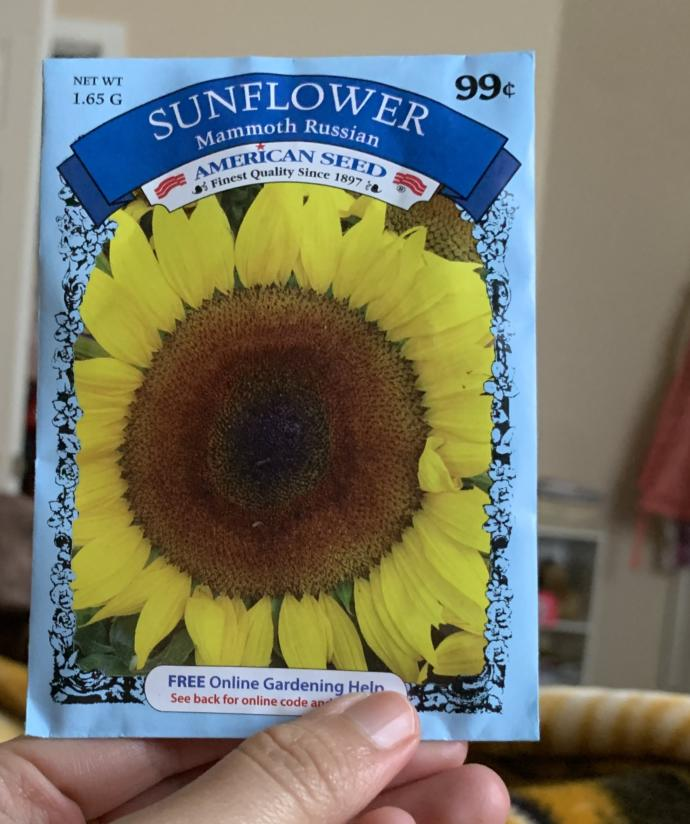 Which flowers should i plant ?