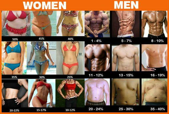 What percentage of body fat do you prefer in a partner?