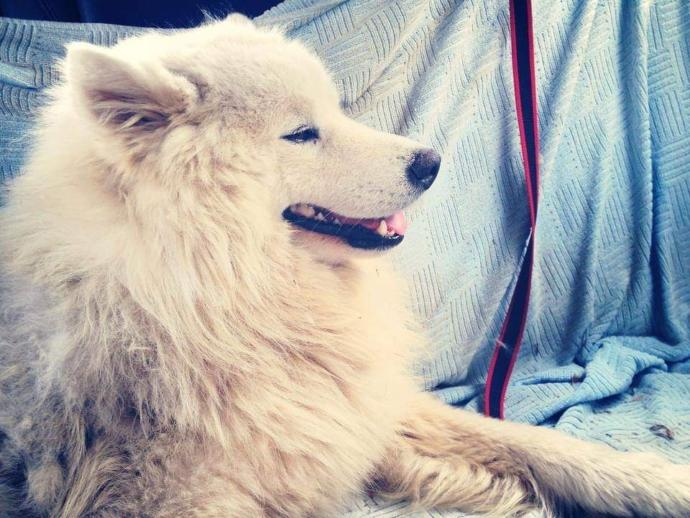 Have you ever lost beloved pet? how did you move on?