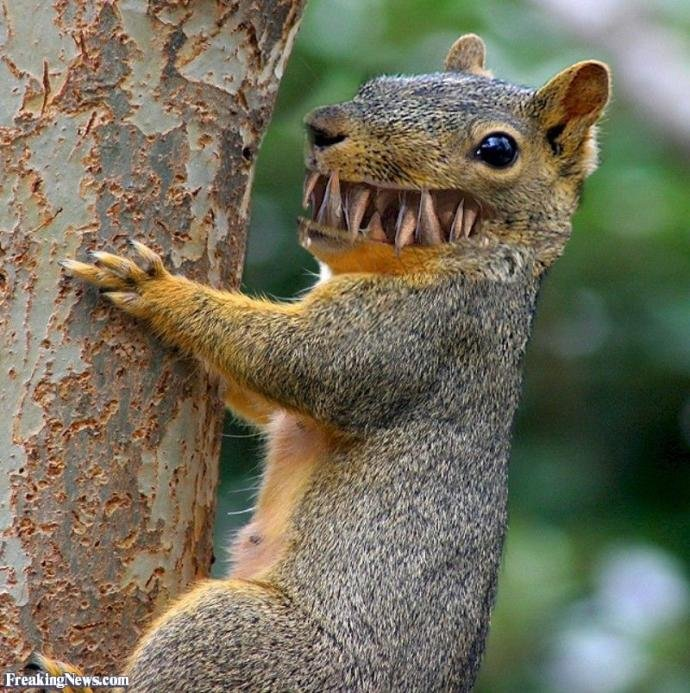 What do you feed your attack squirrel?