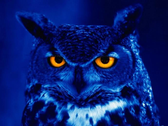 Are You An Early Bird or Night Owl?