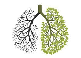 Isn't it amazing how a lung looks like a tree?