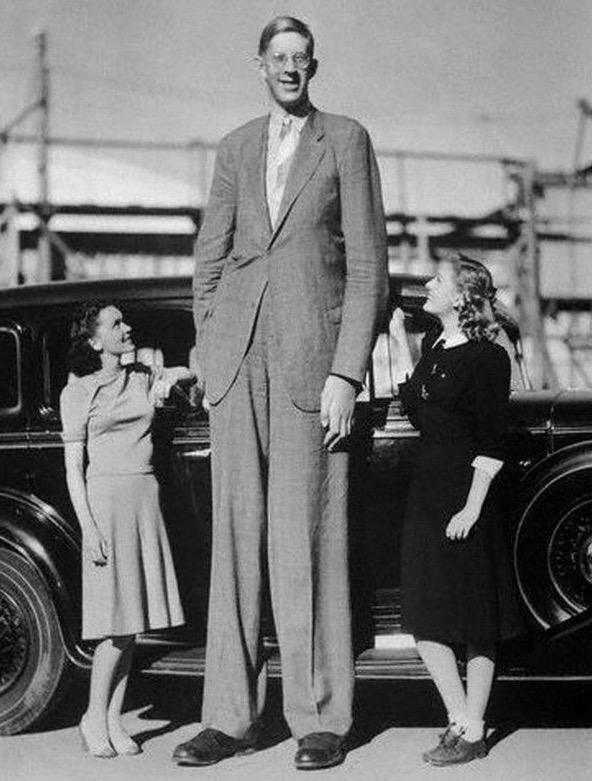 Why are Western women attracted to height? I don't get the reasoning?