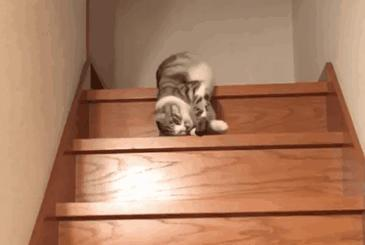 The ONLY way i'd go down the stairs as a cat