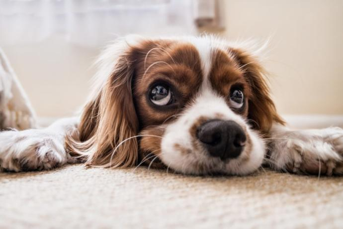 How do I control my dogs peeing problem?