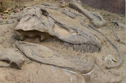 If you found a Tyrannosaurus Rex Skeleton embedded in rock formations in North America on public land and only you knew about it What Would You Do?