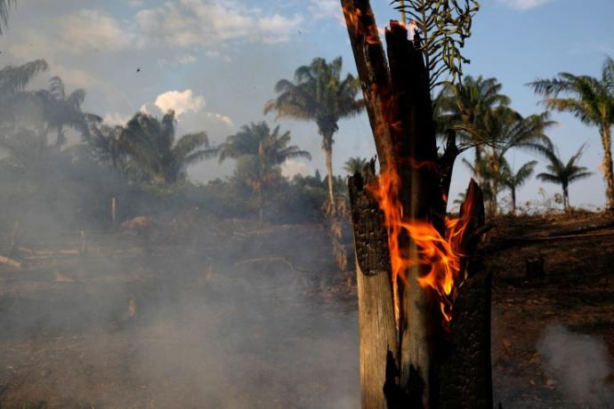 The Amazon Rainforest Is Burning At A Record Rate! Thoughts?