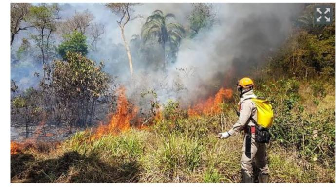 Do you think the Amazon Rainforest Fires are caused by Global Warming?