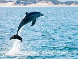 What word would you associate with a dolphin?