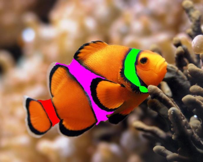 Rare Clownfish