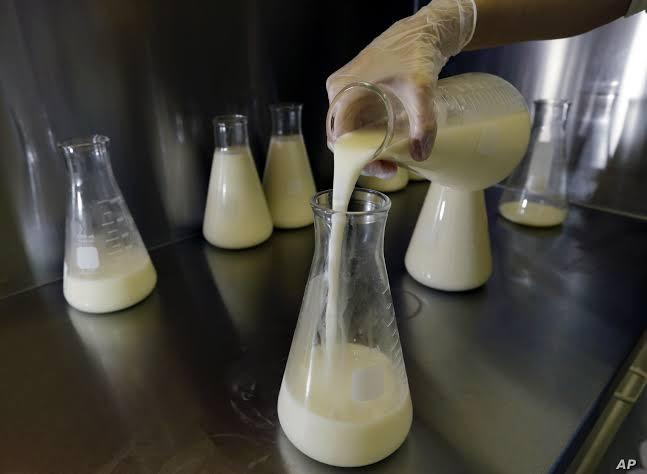 Why don't we drink human milk?