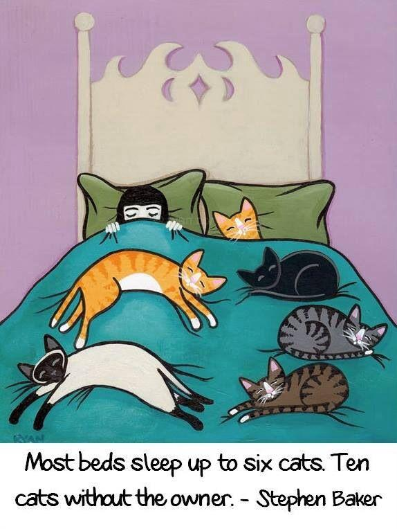 Cat people, how many cats can you sleep on your bed?