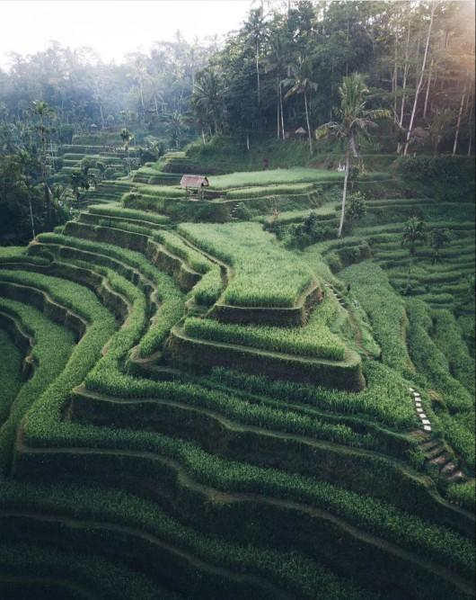 Would you like visit one of Bali's rice terraces?