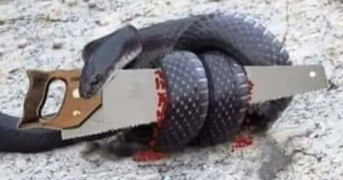 What do you think of the parable of the Snake and the Saw?