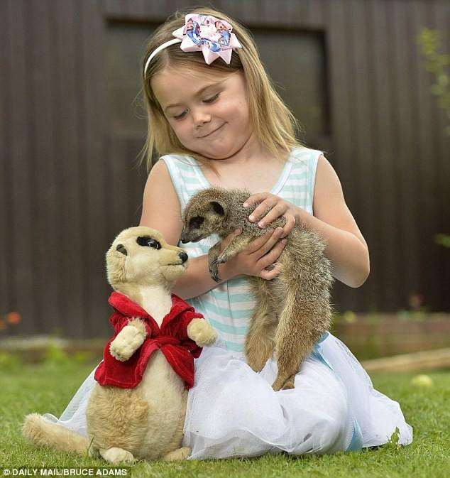 Would you consider having a meerkat as a pet?