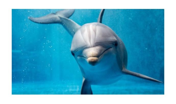 Which word would you associate with dolphin?