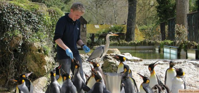 Have you ever fed a penguin?