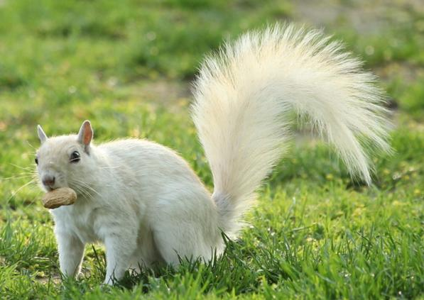 Have you ever seen a white squirrel?
