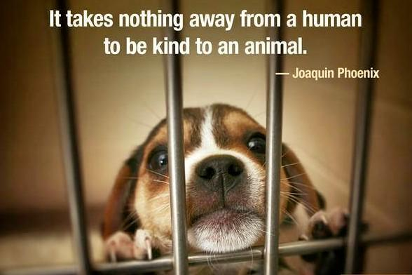 Would you be willing to save an animals life this Christmas?