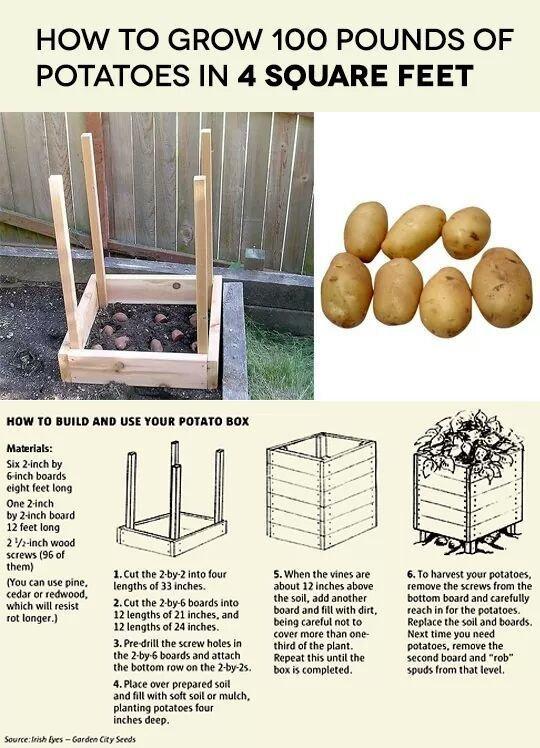 Get lots of potatoes