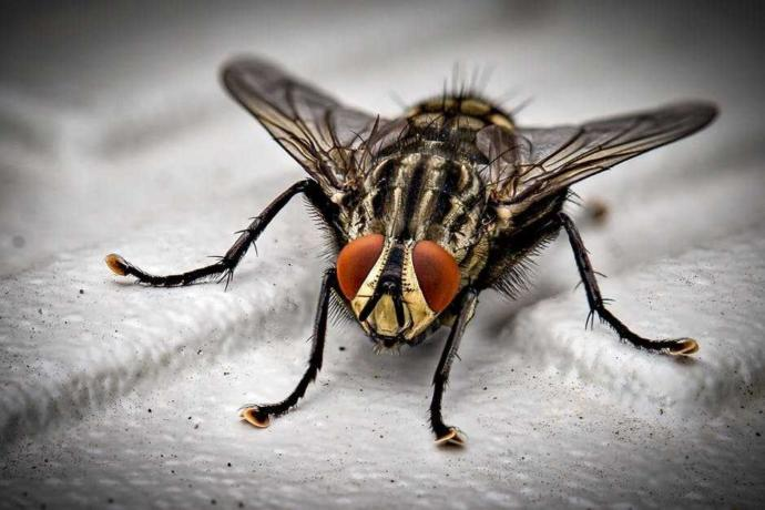 Which insect you hate most?
