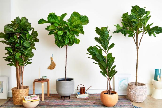 Do you have fake plants in your home?