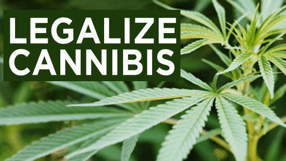 New Zealand will hold a referendum in September on whether to legalise cannabis. How would you vote?