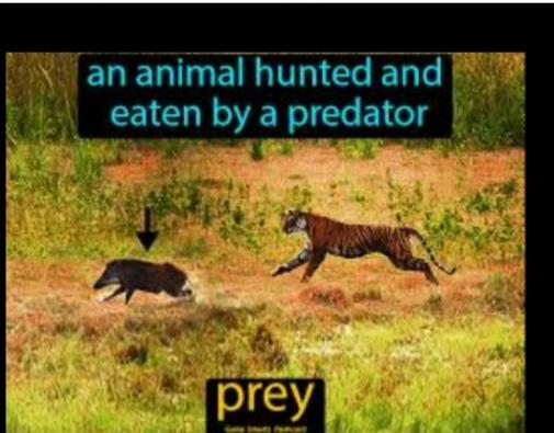 What Kind Of Sex Animal Are You? Predator Or Prey?