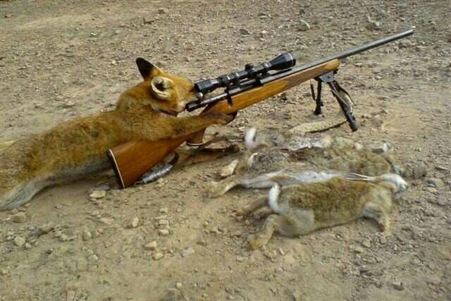 Should animals be allowed to have guns?