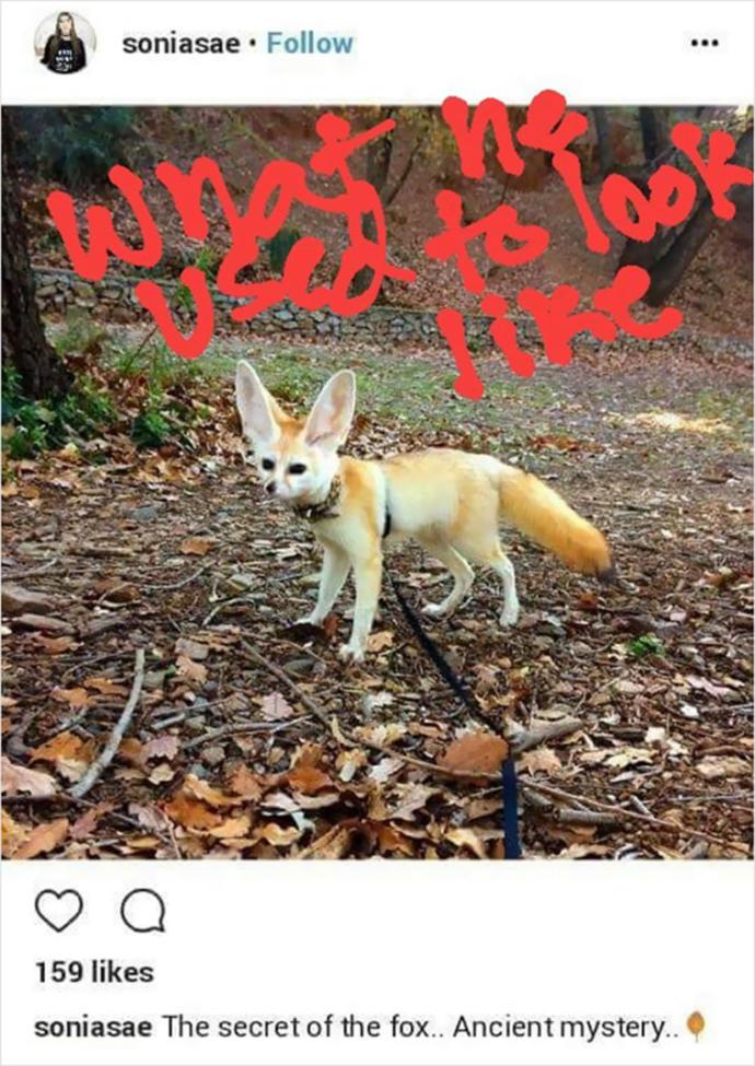 Fennec Fox before vegan diet