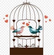 How are you lovebirds surviving in captivity?