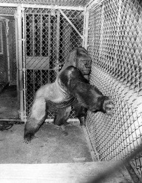 What you think about the old school zoos?