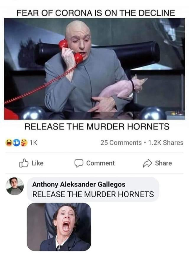 """What do you think about these """"Murder Hornets""""?"""