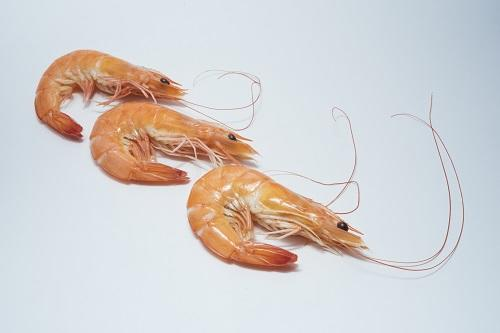 People who eat shrimp are gross, agree?
