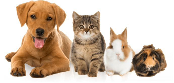 When it comes to pets are do you prefer Cats, Dogs or other animals?