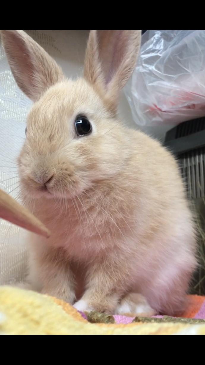 Do you think my bunny is cute?