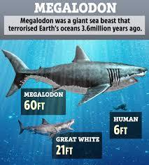 Do you think Megalodon is still alive?