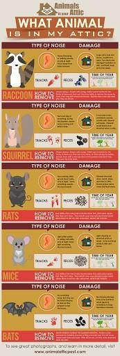 What animal noises have you heard at night?