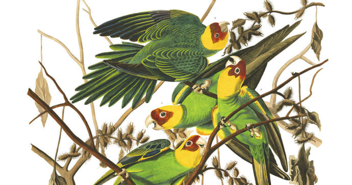 Is it very sad what happened to the only indigenous parrot to the United States?