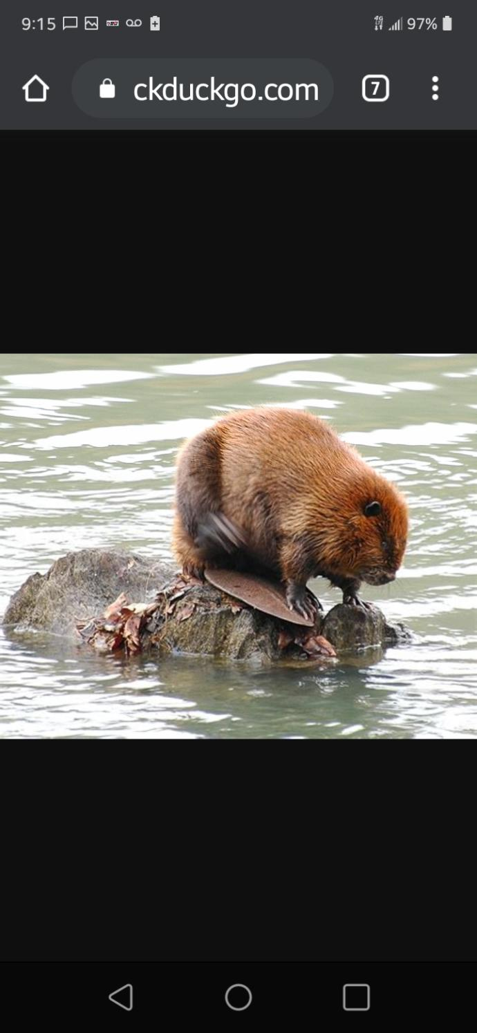 X RatedBest looking beaver contest who can it be youve never seen Beaver like this?