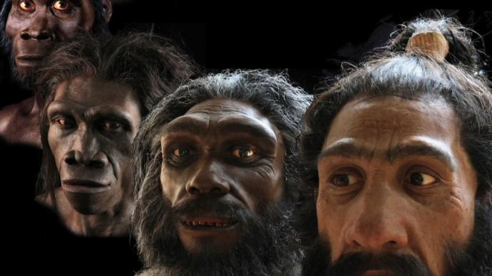 What was the most important discovery in the field of paleo-anthropology (human evolution)?
