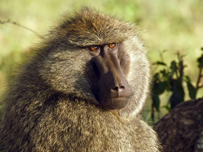 Which of these monkeys is the ugliest?