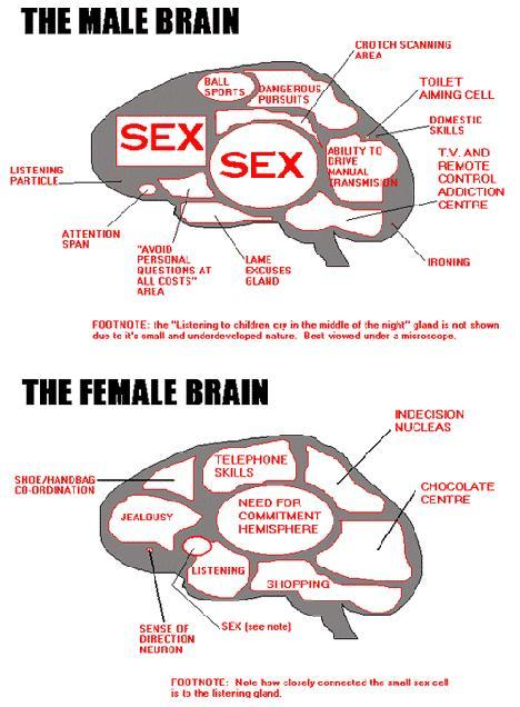 Are these brain differences between males and females accurate?