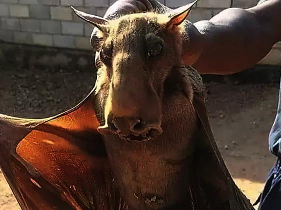 What type of animal is this?